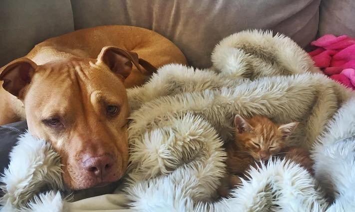 pes z útulku záchrana psa pomoc psům pitbul a kotě pes s kočkou příběhy se psy 8
