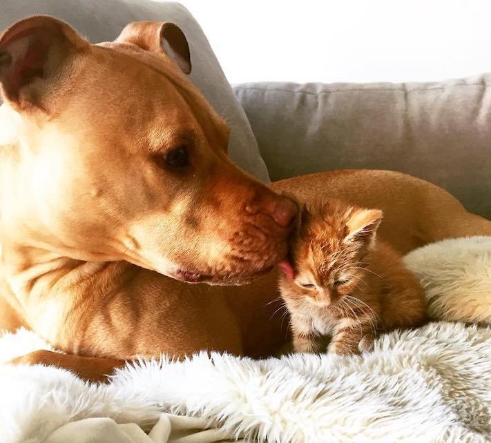 pes z útulku záchrana psa pomoc psům pitbul a kotě pes s kočkou příběhy se psy 9