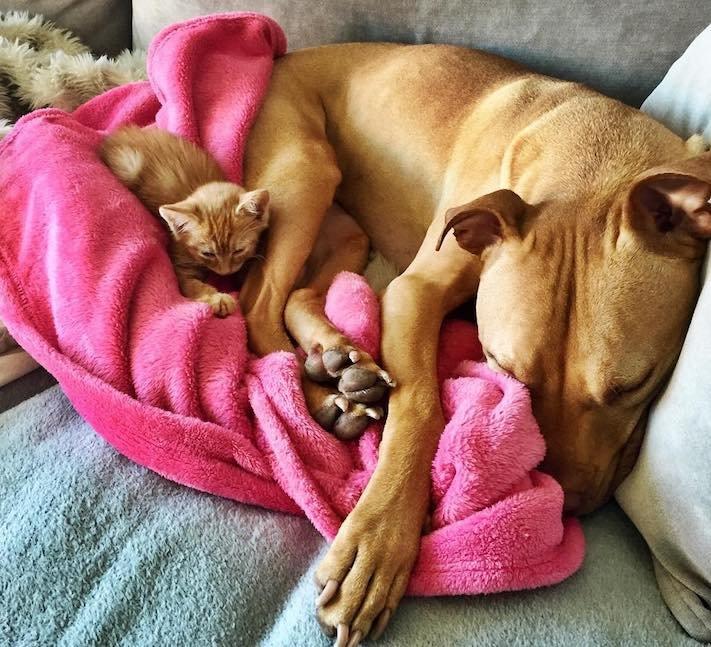 pes z útulku záchrana psa pomoc psům pitbul a kotě pes s kočkou příběhy se psy 9a