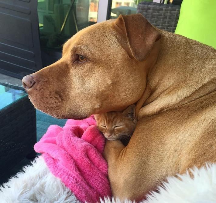 pes z útulku záchrana psa pomoc psům pitbul a kotě pes s kočkou příběhy se psy 10