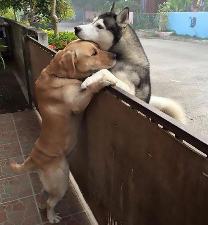 žlutý zlatý labrador labradorský retrívr pravé přátelství mezi psi se psem nejlepší psí příběh 3