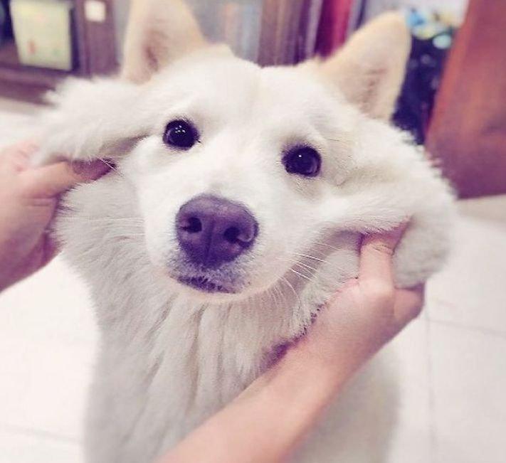 směje se pes psí úsměv u psa 5