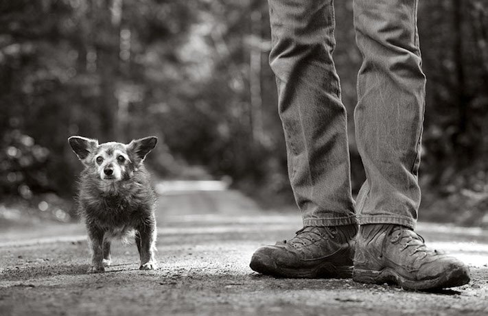 stáří u psů starý pes problémy vzpomínky fotografie obrázky příběhy 1