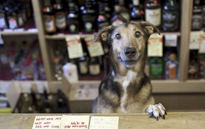 stáří u psů starý pes problémy vzpomínky fotografie obrázky příběhy 2