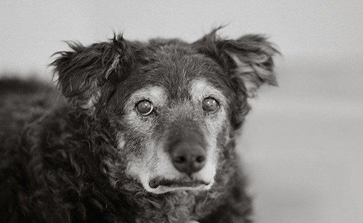 stáří u psů starý pes problémy vzpomínky fotografie obrázky příběhy 3