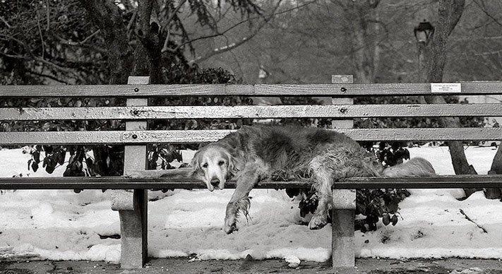 stáří u psů starý pes problémy vzpomínky fotografie obrázky příběhy 5