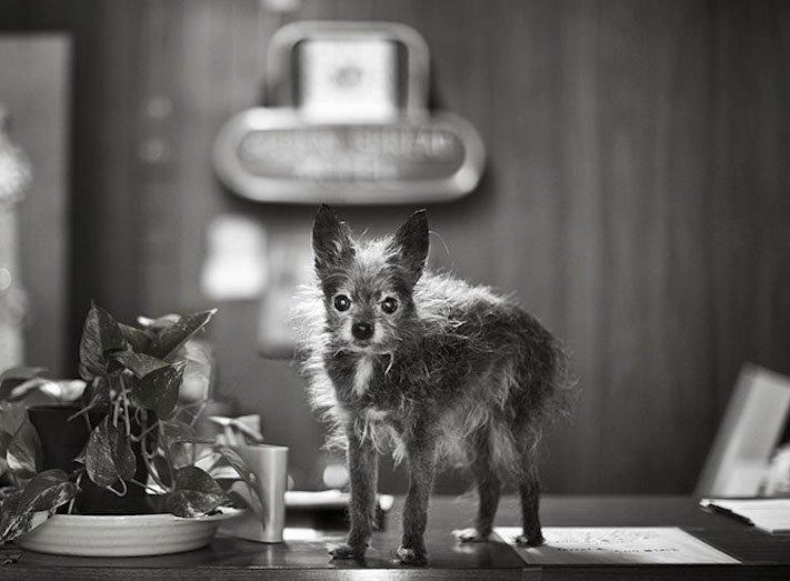 stáří u psů starý pes problémy vzpomínky fotografie obrázky příběhy 6