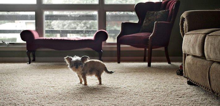stáří u psů starý pes problémy vzpomínky fotografie obrázky příběhy 7