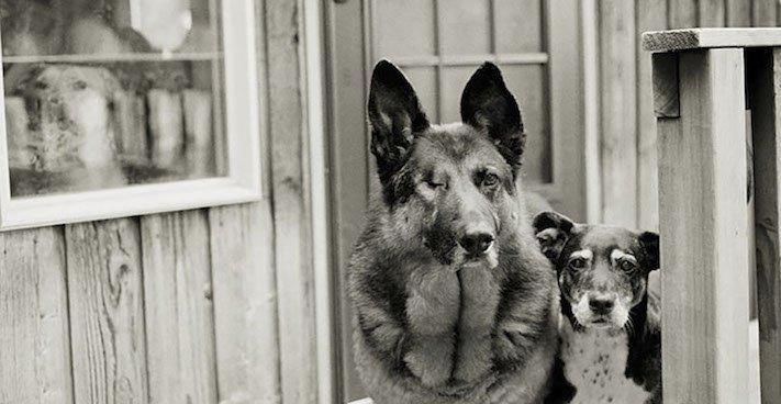 stáří u psů starý pes problémy vzpomínky fotografie obrázky příběhy 9