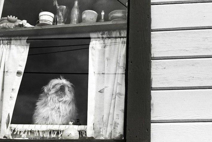 stáří u psů starý pes problémy vzpomínky fotografie obrázky příběhy 11