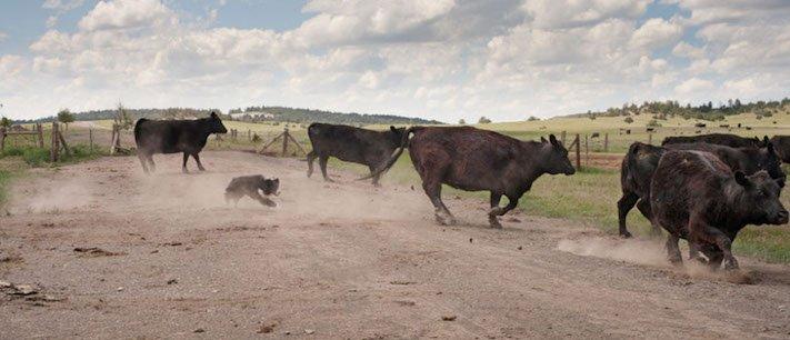 stáří u psů starý pes problémy vzpomínky fotografie obrázky příběhy 12