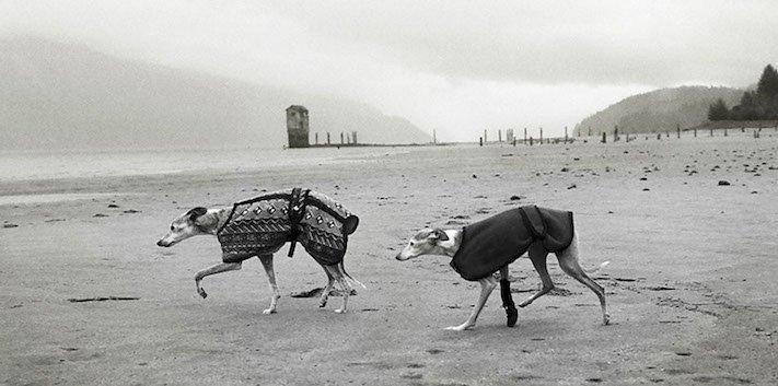 stáří u psů starý pes problémy vzpomínky fotografie obrázky příběhy 13