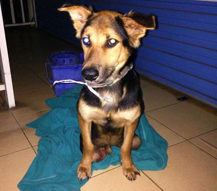 ochrnutý pes nemůže na zadní nohy zlomená páteř příbeh psa 3