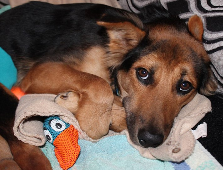 ochrnutý pes nemůže na zadní nohy zlomená páteř příbeh psa 9