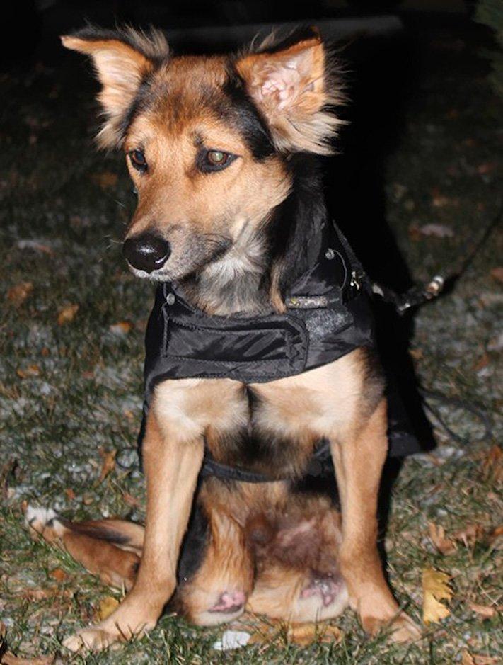 ochrnutý pes nemůže na zadní nohy zlomená páteř příbeh psa 10