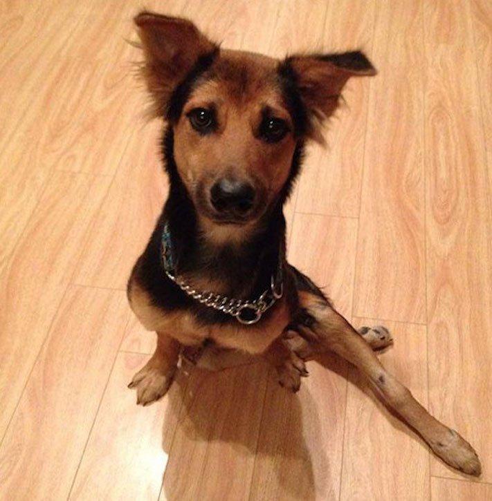 ochrnutý pes nemůže na zadní nohy zlomená páteř příbeh psa 10b