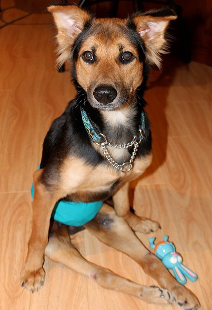ochrnutý pes nemůže na zadní nohy zlomená páteř příbeh psa 11