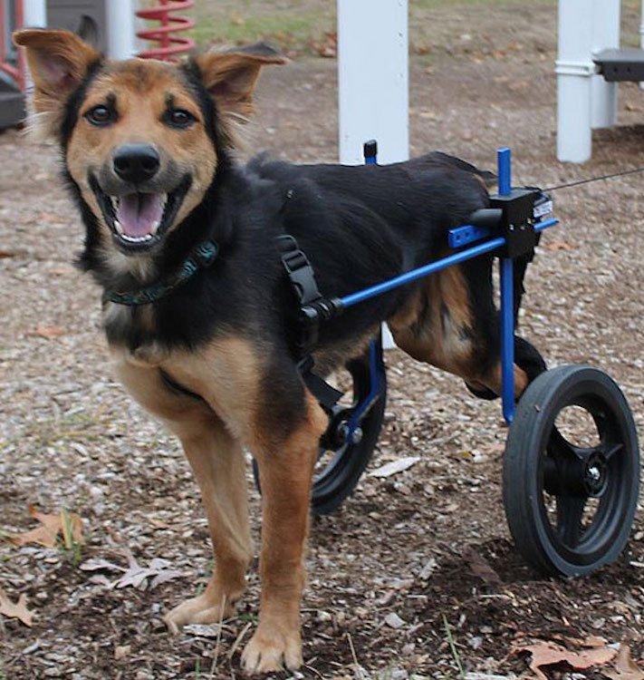 ochrnutý pes nemůže na zadní nohy zlomená páteř příbeh psa 13