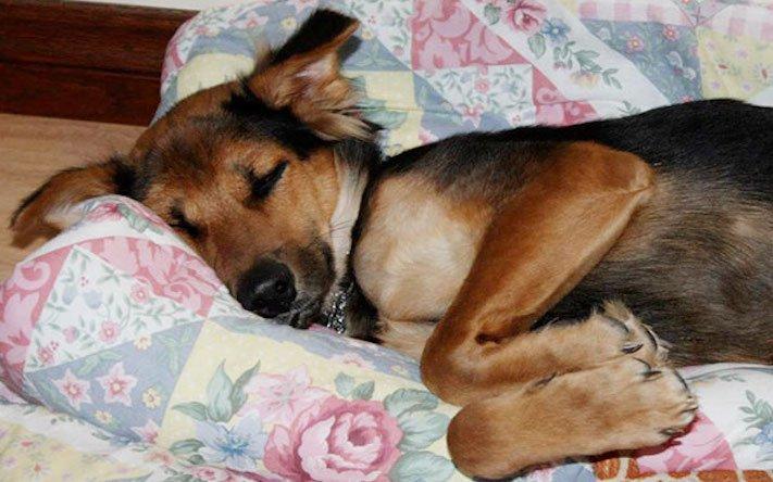 ochrnutý pes nemůže na zadní nohy zlomená páteř příbeh psa 13a