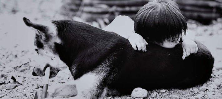 správná výchova dítěte chování ke psovi psí rodič 8