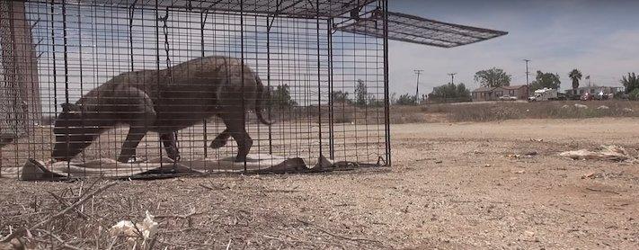 vystrašený pes pitbul bez majitele agresivní fenka hledala pouze novou rodinu adopce psů psa pomoc 3a