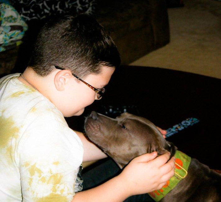 vystrašený pes pitbul bez majitele agresivní fenka hledala pouze novou rodinu adopce psů psa pomoc 5