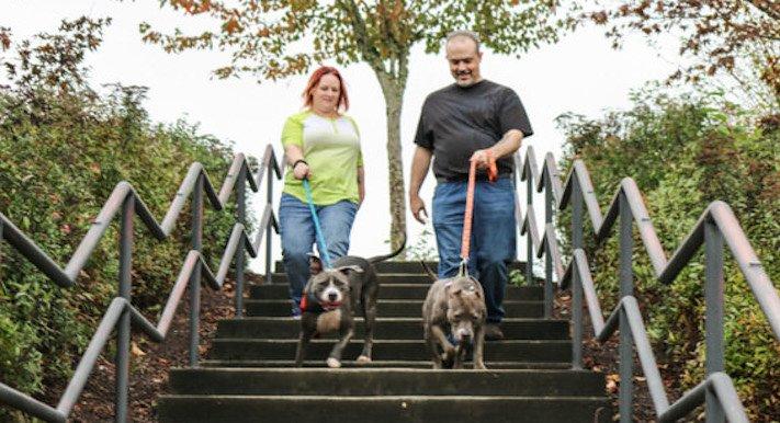 vystrašený pes pitbul bez majitele agresivní fenka hledala pouze novou rodinu adopce psů psa pomoc 6