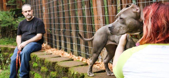 vystrašený pes pitbul bez majitele agresivní fenka hledala pouze novou rodinu adopce psů psa pomoc 7