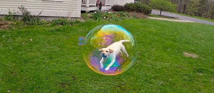 nejlepší obrázky psů dokonalé psí momentky 1