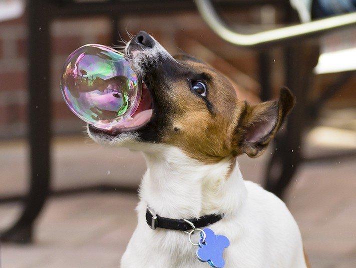 nejlepší obrázky psů dokonalé psí momentky 8