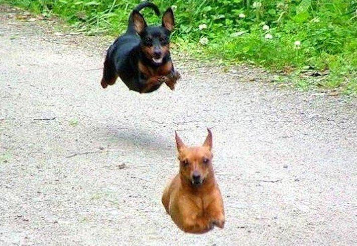 nejlepší obrázky psů dokonalé psí momentky 10