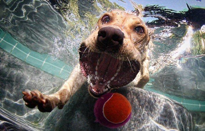 nejlepší obrázky psů dokonalé psí momentky 11