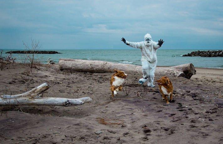 pes plemeno psa nova scotia duck tolling retrívr psí příběhy fotografie obrázky fotky 4