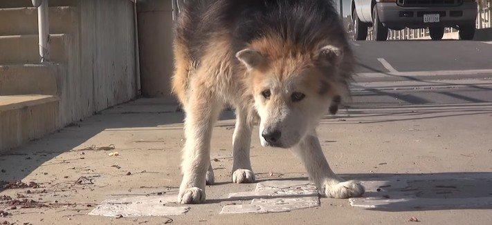 záchrana psů psa u vodárny starý opuštěný pes azyl pro staré psy 1