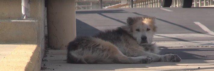 záchrana psů psa u vodárny starý opuštěný pes azyl pro staré psy 1a