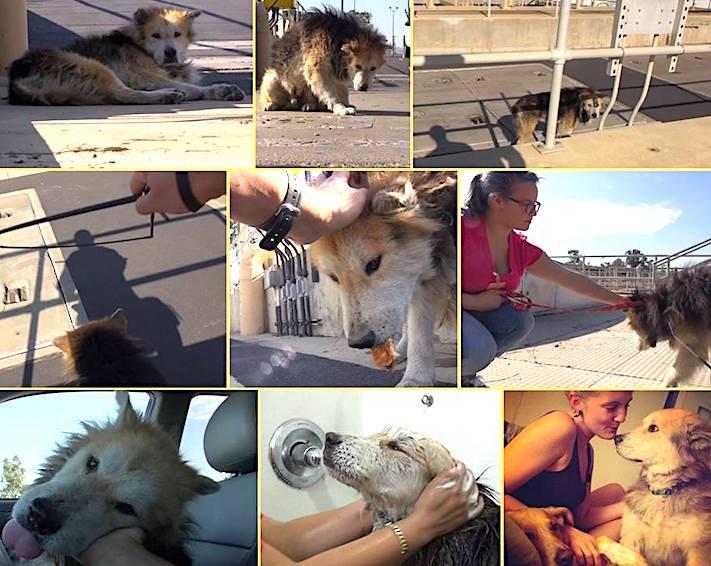 záchrana psů psa u vodárny starý opuštěný pes azyl pro staré psy 4