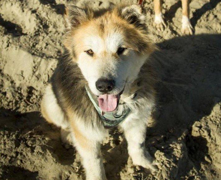 záchrana psů psa u vodárny starý opuštěný pes azyl pro staré psy 6