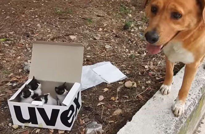 pes záchranář záchraná brigáda kynologů zachránil ztracená koťata kočky 2