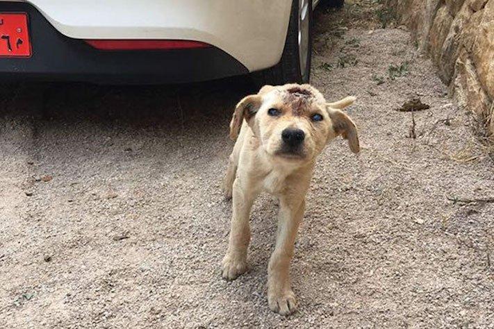 štěně z ulice bez domova střelené do hlavy adopce psů 1