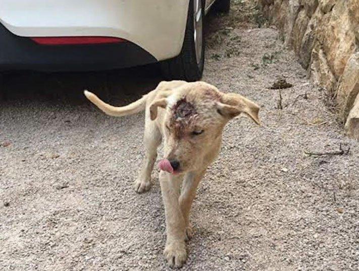 štěně z ulice bez domova střelené do hlavy adopce psů 2