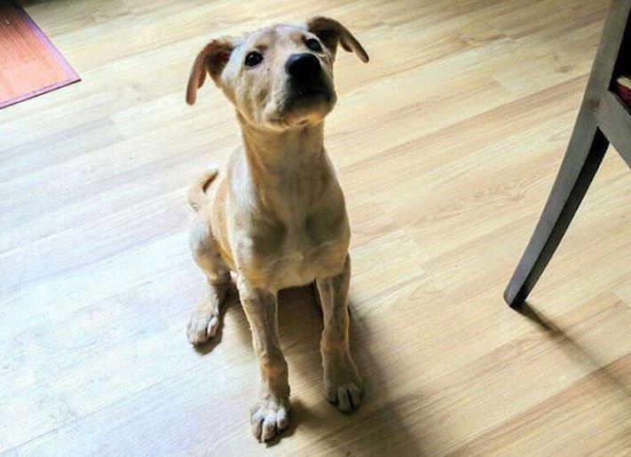 štěně z ulice bez domova střelené do hlavy adopce psů 6