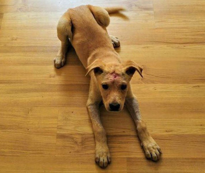 štěně z ulice bez domova střelené do hlavy adopce psů 7