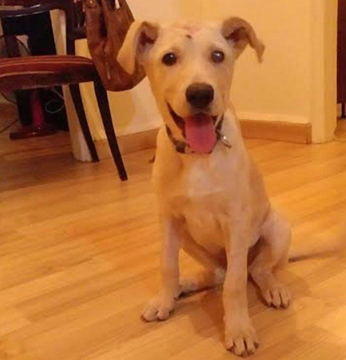 štěně z ulice bez domova střelené do hlavy adopce psů 8