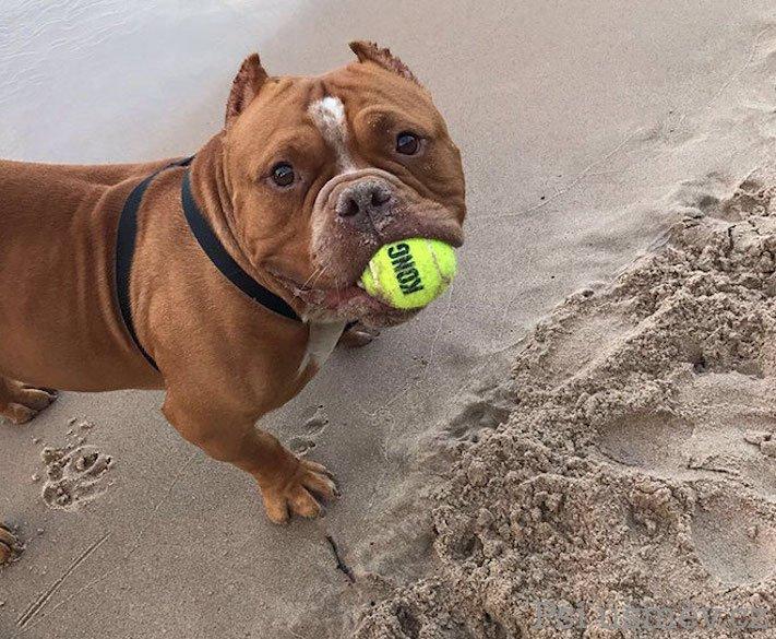 příběhy psů z útulku adopce psa pitbul pomoc psům 2