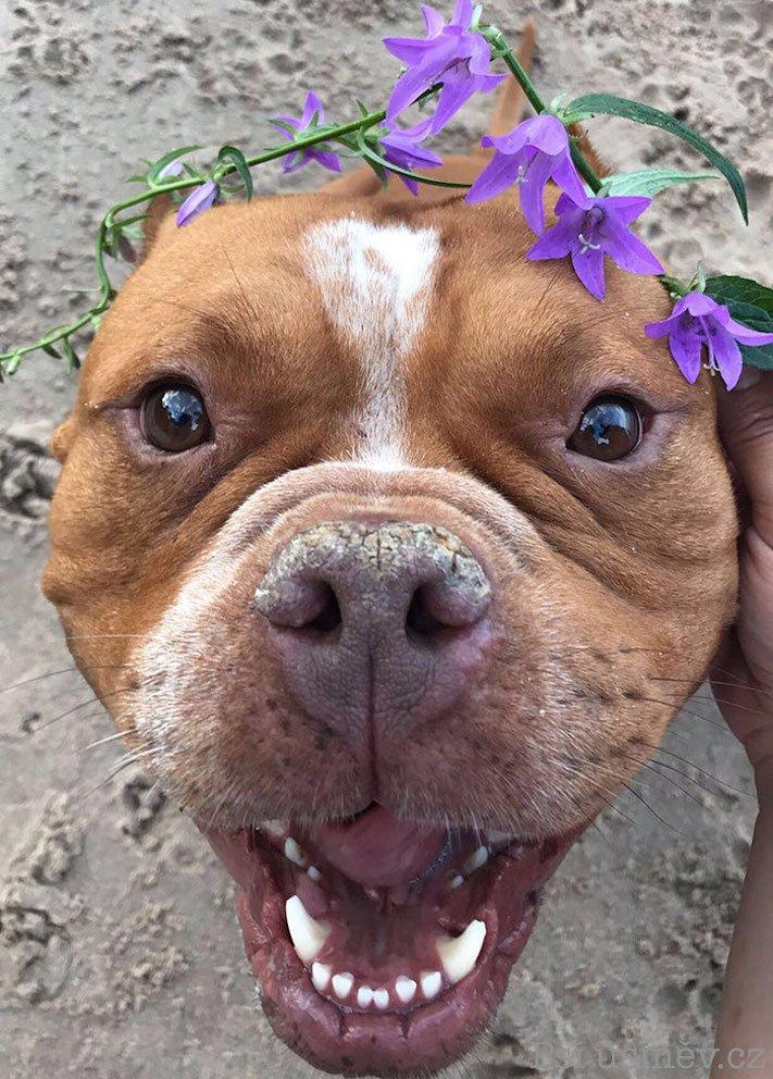 příběhy psů z útulku adopce psa pitbul pomoc psům 3