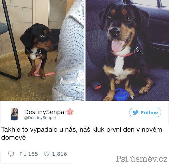 příběhy psů z útulku adopce psa pitbul pomoc psům 5