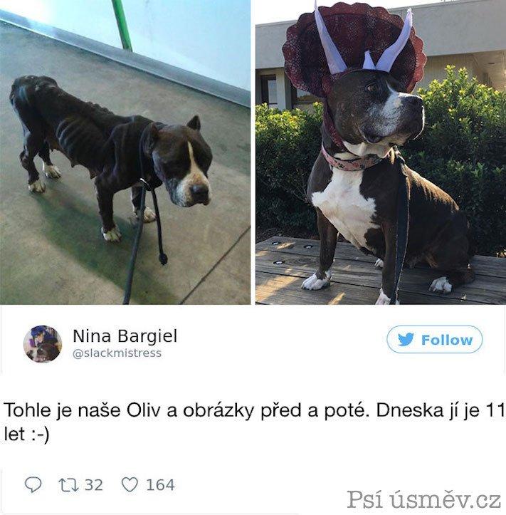 příběhy psů z útulku adopce psa pitbul pomoc psům 5b