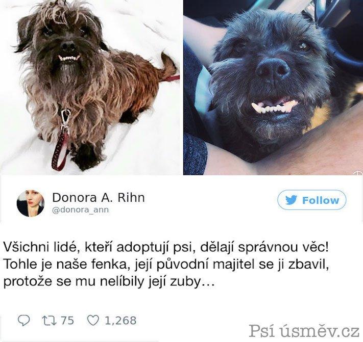 příběhy psů z útulku adopce psa pitbul pomoc psům 5d