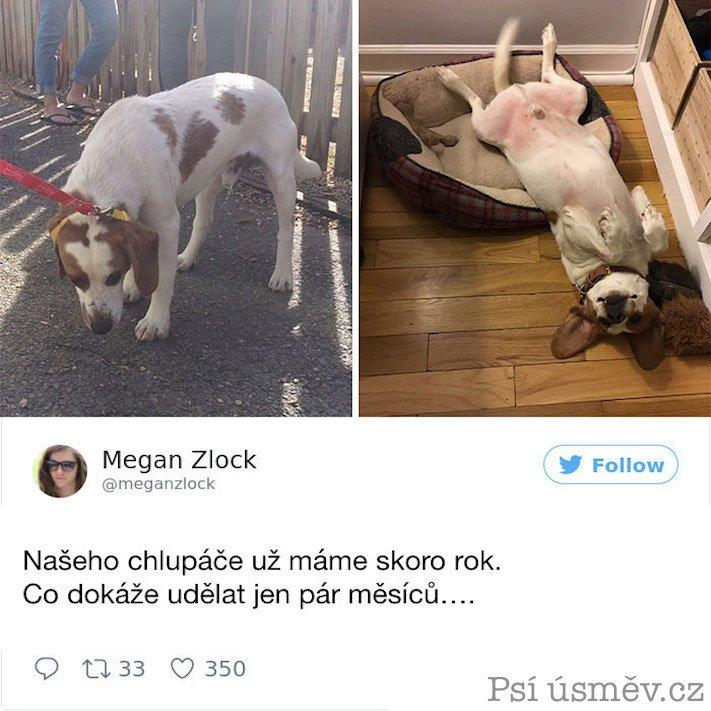příběhy psů z útulku adopce psa pitbul pomoc psům 5f