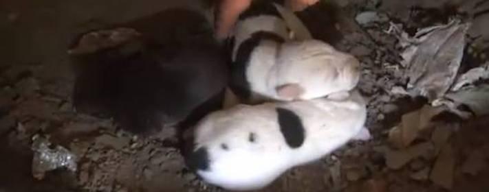 záchranná akce pitbula psů psa psi pes štěňata video o psech 1a